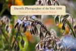 Durrell's Photographer of the Year 2016