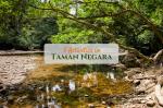 5 Activities in Taman Negara